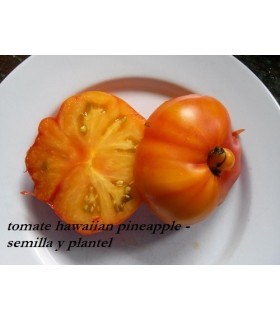 plantel de tomate hawaiian pineapple
