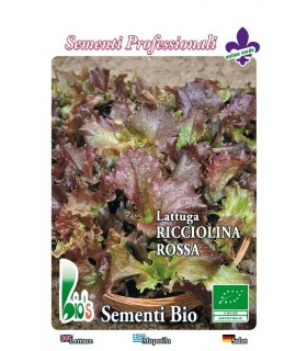 lechuga red salad bolw (semillas ecológicas)
