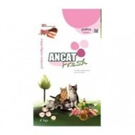 ancat fresh kitten