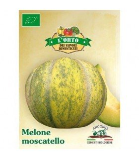 melon moscatello,